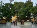 Yangon Botataung Pagode Nov_2017 -058