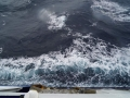 Jan2020_Beagle-Falkland-058