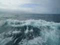 Jan2020_Beagle-Falkland-091