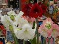Flowermarket_Singelgracht_Amsterdam_May2018_-002