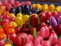 Flowermarket_Singelgracht_Amsterdam_May2018_-009