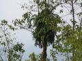 PflanzenOstbhutanSubtropisch -001