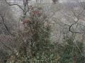 PflanzenOstbhutanSubtropisch -003