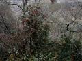 PflanzenOstbhutanSubtropisch -004