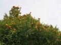 PflanzenOstbhutanSubtropisch -010