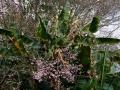 PflanzenOstbhutanSubtropisch -012