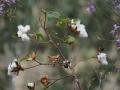 PflanzenOstbhutanSubtropisch -021