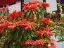 Botanik im subtropischen Ostbhutan