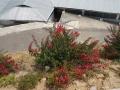 PflanzenOstbhutanSubtropisch -034