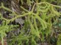 PflanzenOstbhutanSubtropisch -039
