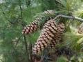 PflanzenOstbhutanSubtropisch -053