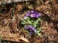 PflanzenOstbhutanSubtropisch -057