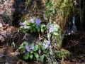PflanzenOstbhutanSubtropisch -059