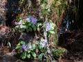 PflanzenOstbhutanSubtropisch -060