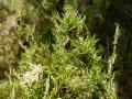 PflanzenOstbhutanSubtropisch -064