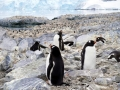 Jan2020_Cuverville_Antarctic-001