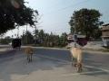Delhi-Guwahati-Samdrup-039