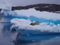 Jan2020_Fotoboat_PeneauIsland_Antarctic-088
