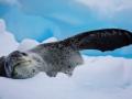 Jan2020_Fotoboat_PeneauIsland_Antarctic-089