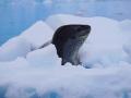 Jan2020_Fotoboat_PeneauIsland_Antarctic-105