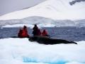 Jan2020_Fotoboat_PeneauIsland_Antarctic-124