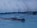 Jan2020_Fotoboat_PeneauIsland_Antarctic-160