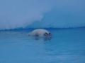 Jan2020_Fotoboat_PeneauIsland_Antarctic-164