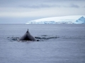 Jan2020_FournierBucht_Antarctic-000