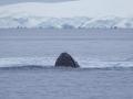Jan2020_FournierBucht_Antarctic-002