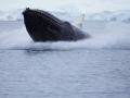 Jan2020_FournierBucht_Antarctic-003
