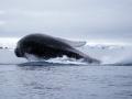 Jan2020_FournierBucht_Antarctic-007