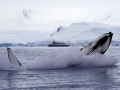 Jan2020_FournierBucht_Antarctic-012