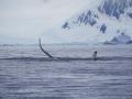 Jan2020_FournierBucht_Antarctic-013