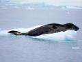 Jan2020_FournierBucht_Antarctic-022