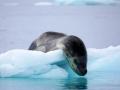 Jan2020_FournierBucht_Antarctic-023
