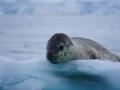 Jan2020_FournierBucht_Antarctic-024