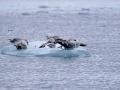 Jan2020_FournierBucht_Antarctic-026
