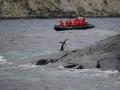 Jan2020_GibbsIsland_Antarctic-001