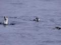 Jan2020_GibbsIsland_Antarctic-029