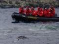 Jan2020_GibbsIsland_Antarctic-040