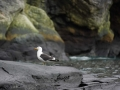 Jan2020_GibbsIsland_Antarctic-075