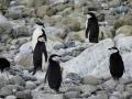 Jan2020_GibbsIsland_Antarctic-082