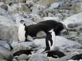 Jan2020_GibbsIsland_Antarctic-083