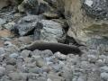 Jan2020_GibbsIsland_Antarctic-087