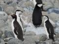 Jan2020_GibbsIsland_Antarctic-088
