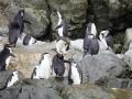 Jan2020_GibbsIsland_Antarctic-089