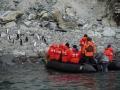 Jan2020_GibbsIsland_Antarctic-094