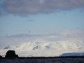 Jan2020_GibbsIsland_Antarctic-144