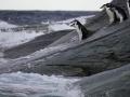 Jan2020_GibbsIsland_Antarctic-151
