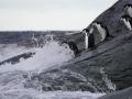 Jan2020_GibbsIsland_Antarctic-152